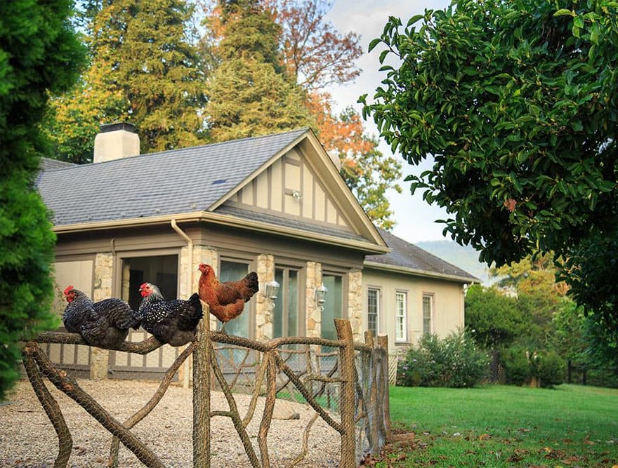 Free Range Chickens in front of Inn